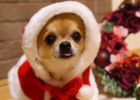 новогодний костюм для собак 2