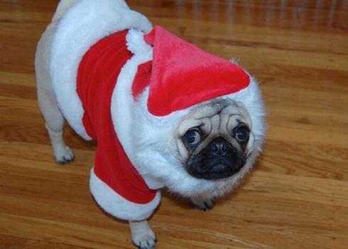 новогодний костюм для собак 3