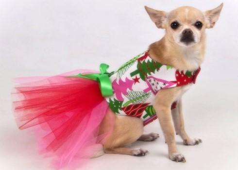 новогодний костюм для собак 4
