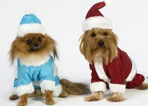 новогодний костюм для собак 5