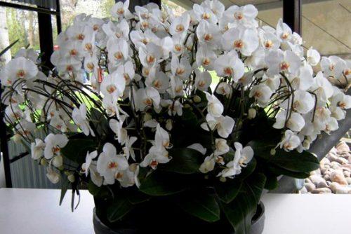 комнатный цветок на свадьбу