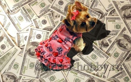 бизнес по пошиву одежды для животных