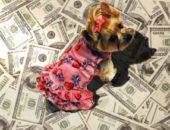 Миниатюра к статье Как организовать бизнес по пошиву одежды для животных