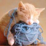 Миниатюра к статье Вязание спицами — практичный вид рукоделия